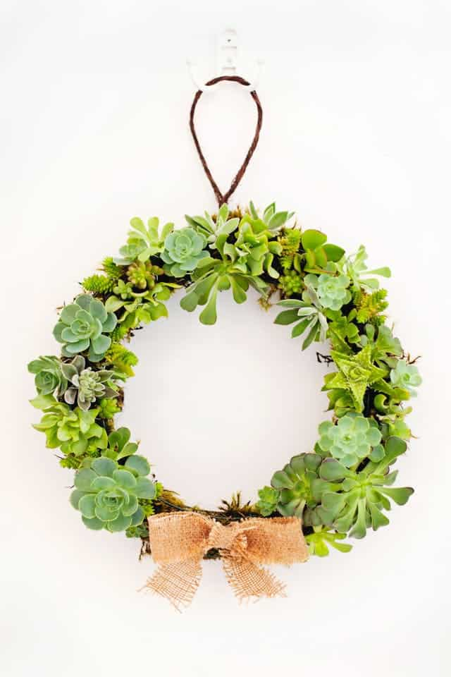 DIY Succulent Wreath
