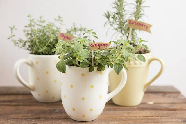 Mug Herb Garden DIY