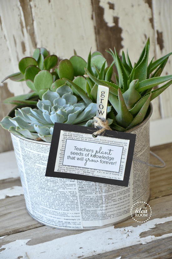 Succulent Teacher Gift Idea