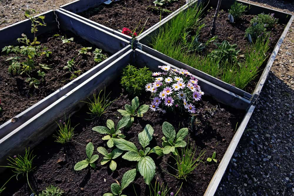 four sleek dark soil garden