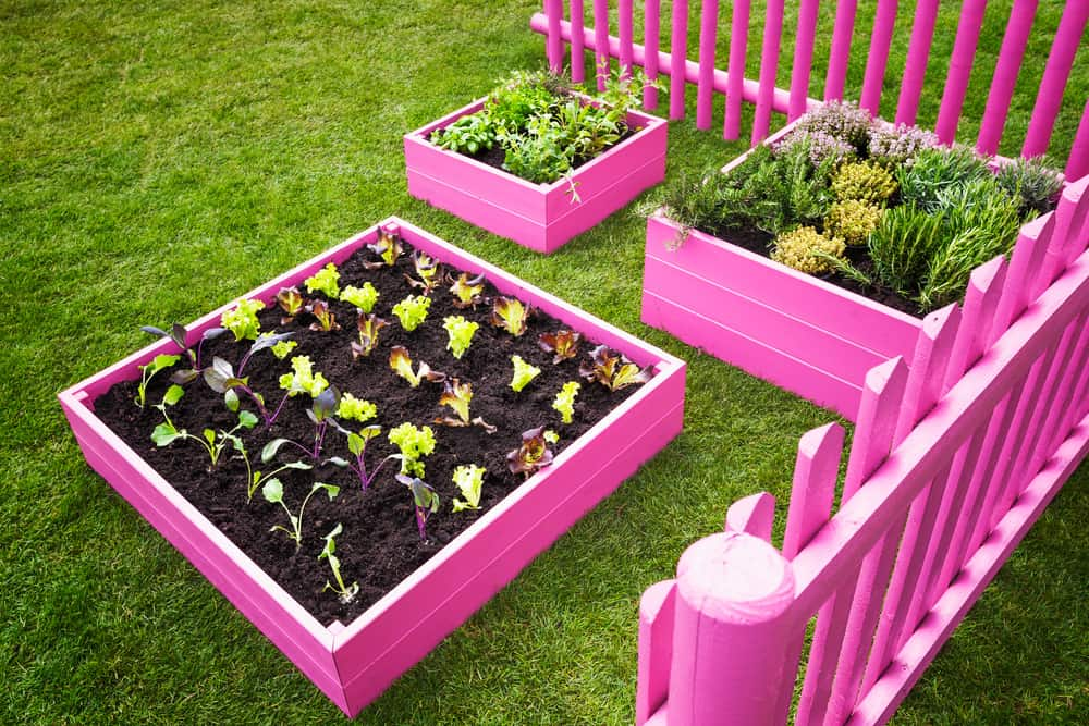 barbie pink raised garden