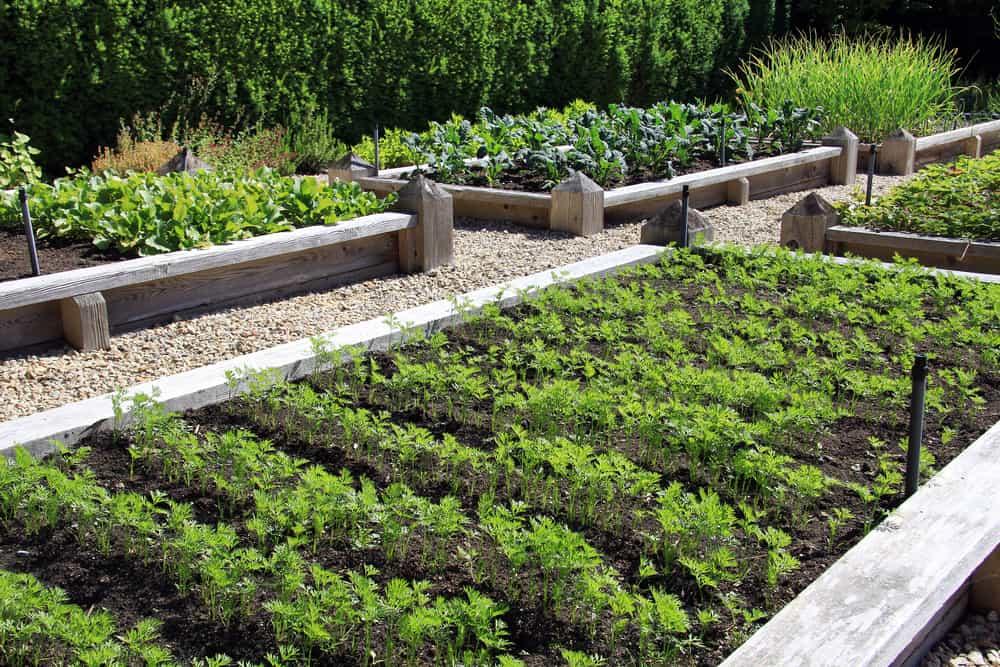 farm style garden rows
