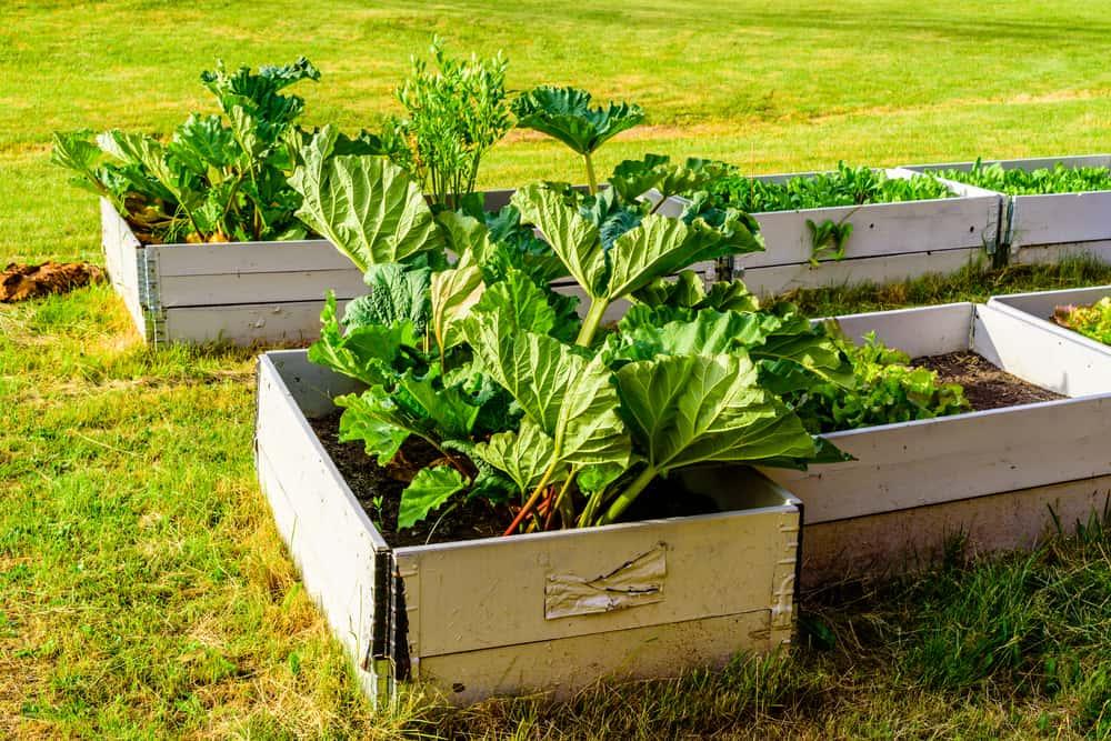 square garden leafy plants