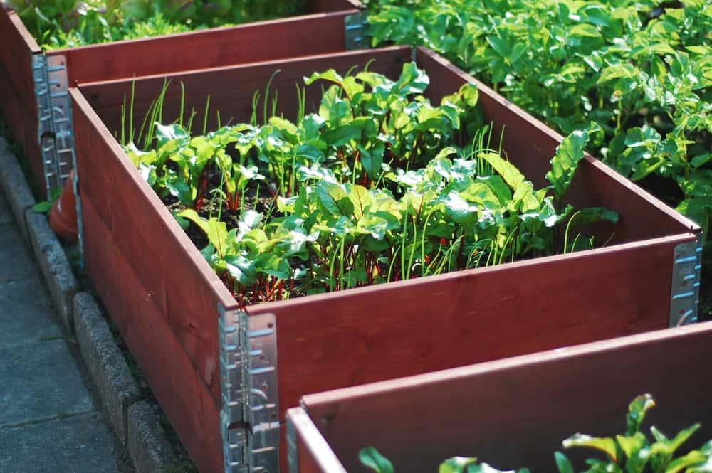 red garden frame