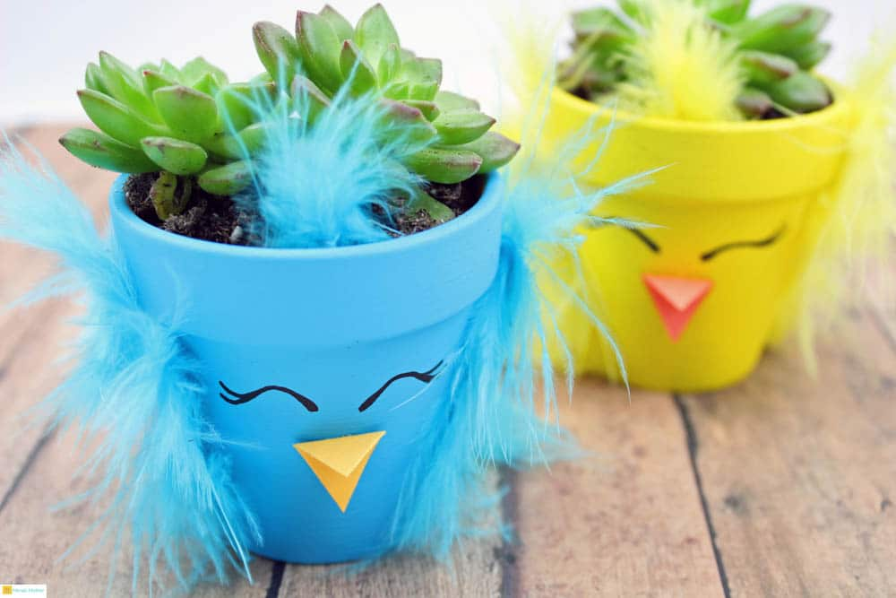 Spring Chick Succulent Planters Decorate your home or office with these adorable spring chick succulent planters. You can't help but smile when you lay your eyes on these cute chicks. Another idea that would also make a terrific gift idea. thesawguy.com