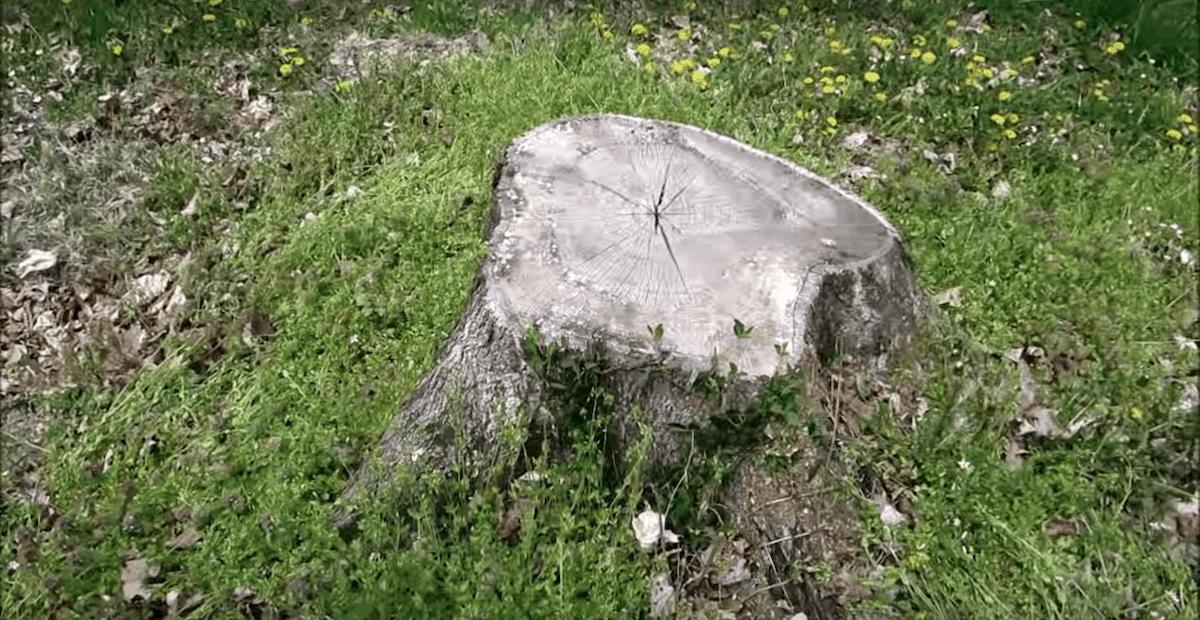 best stump killer